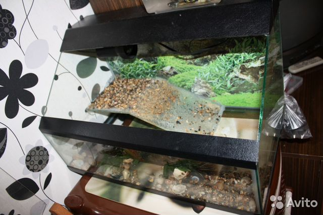 Как сделать кормушку для красноухих черепах