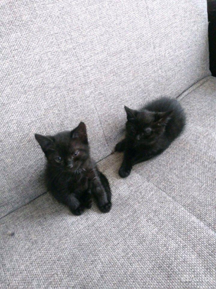 Черненькие котята в добрые руки