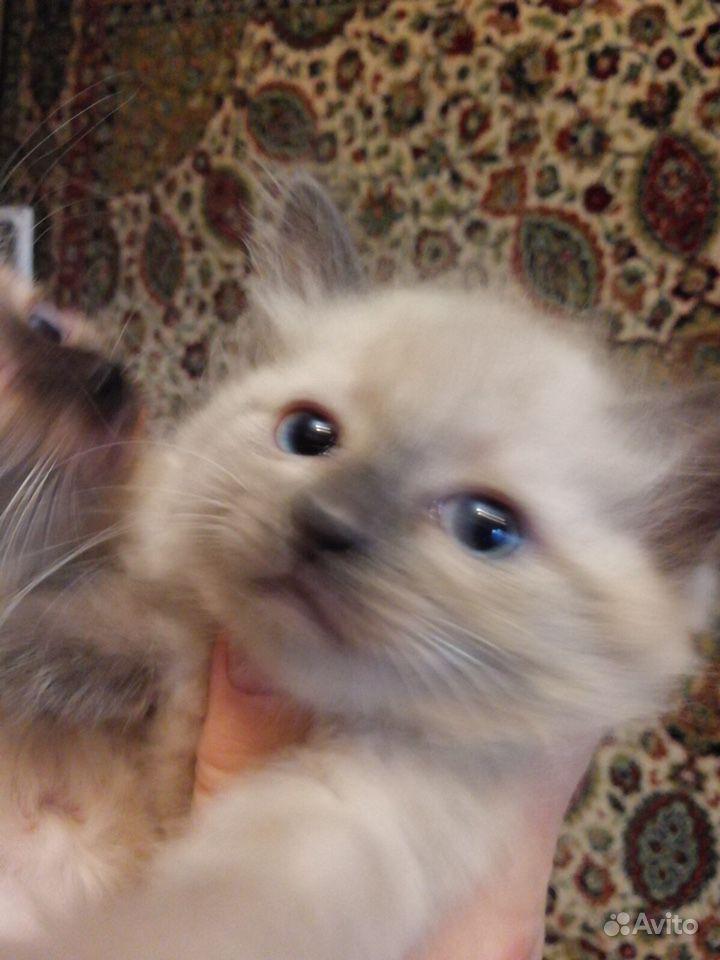 Котята - фотография № 3
