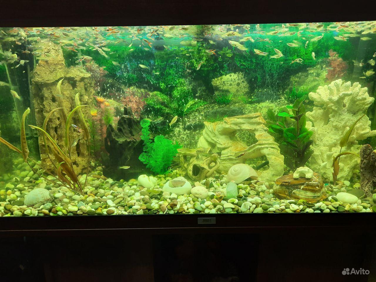 Аквариум juwel 180 литров с рыбками купить на Зозу.ру - фотография № 1