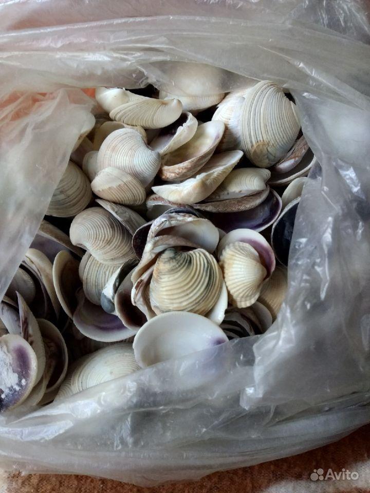 Ракушки с Чёрного моря купить на Зозу.ру - фотография № 5