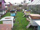Пчёлы, ульи