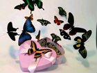 Салют из живых тропических бабочек