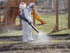 Услуги по уничтожению насекомых, грызунов и запаха
