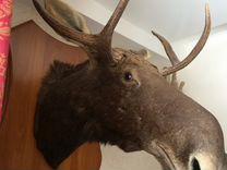 Чучело лося — Охота и рыбалка в Томске
