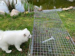 Сетка клетка для кроликов профессиональная 2 места