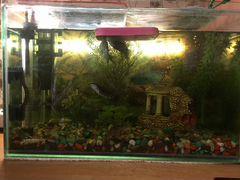 Аквариум с обитаемыми рыбками