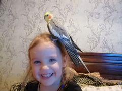 Папуга карелла