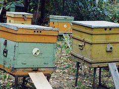 Пчелосемья/улей/Пчелы продам