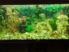 Аквариум juwel 180 литров с рыбками