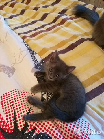 Скачать котенка в самаре на авито