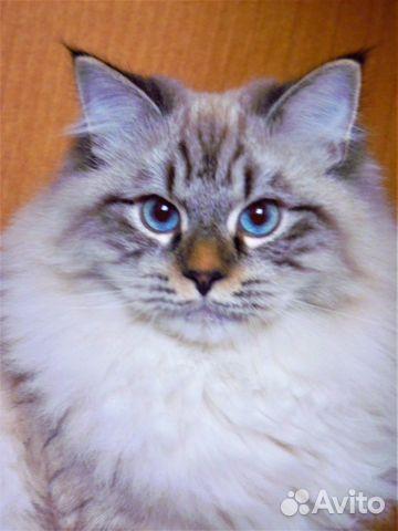 Рязань объявления куплю котят свежие вакансии в пыть-яхе цзн