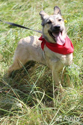 Весёлый щенок Джой в дар в добрые руки купить на Зозу.ру - фотография № 3
