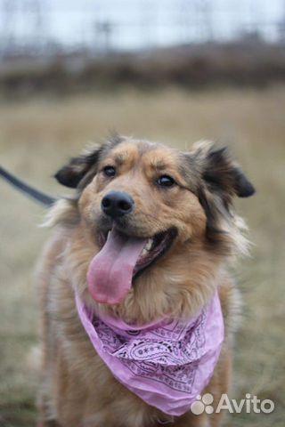 Собака из приюта в дар купить на Зозу.ру - фотография № 3