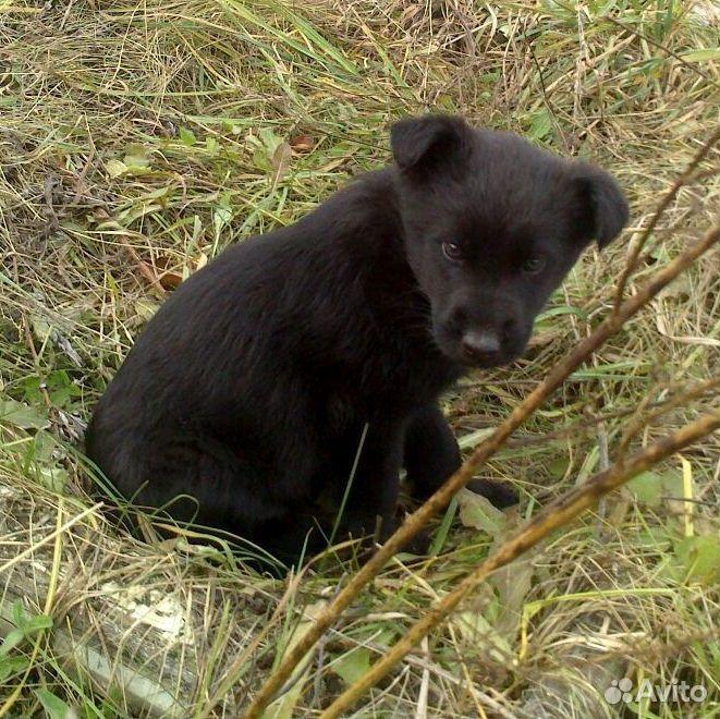 Красивые щенки ищут любящие семьи  89135639765 купить 4