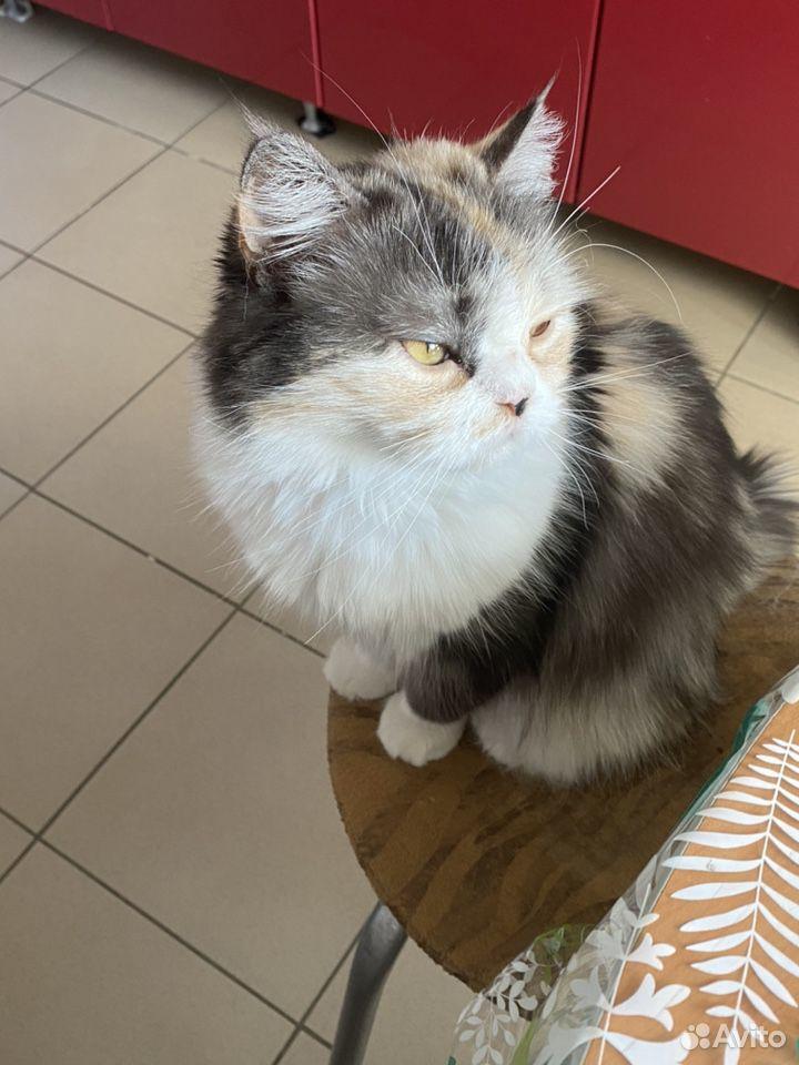 Кошка  89098900465 купить 3