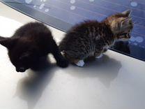 Отдаем двух котят в хорошие руки