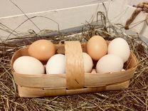 Яйцо деревенское без химии