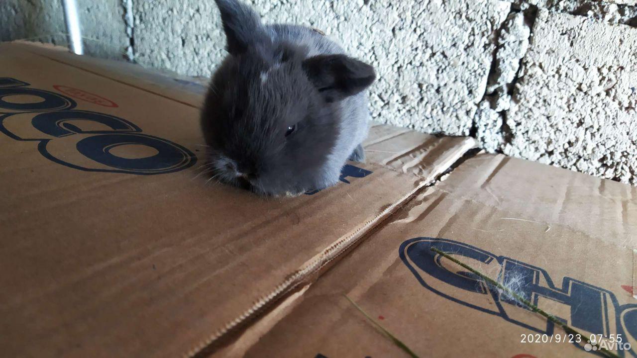 Кролики разных пород  89887675229 купить 9