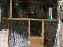 Волнистые попугаи с клеткой
