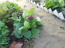 Многолетники(ирис саблевидный,хризантемы осен)