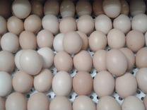 Цыплята бройлеры и инкуб.яйцо- круглый год