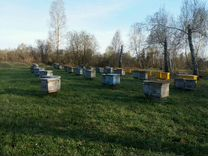 Пчелосемьи на выбор