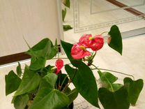 Горшечный цветок — Растения в Екатеринбурге