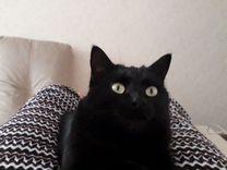 Животные — Кошки в Геленджике