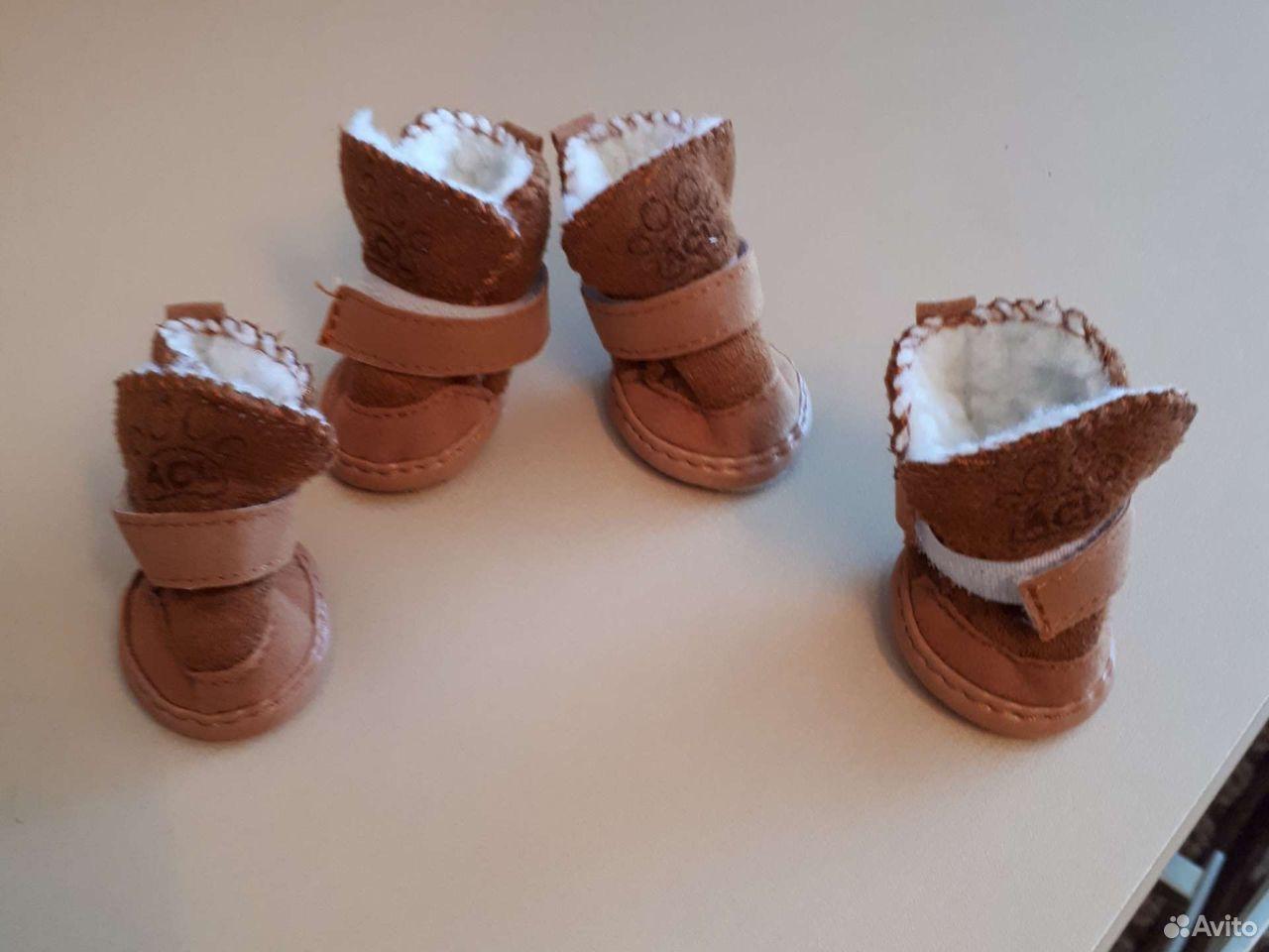 Обувь для питомца  89635654547 купить 1
