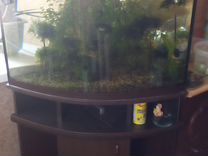 Аквариум 120литров — Аквариум в Геленджике