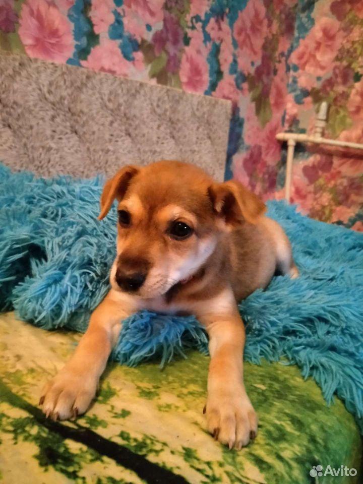 Собака  89877852563 купить 2