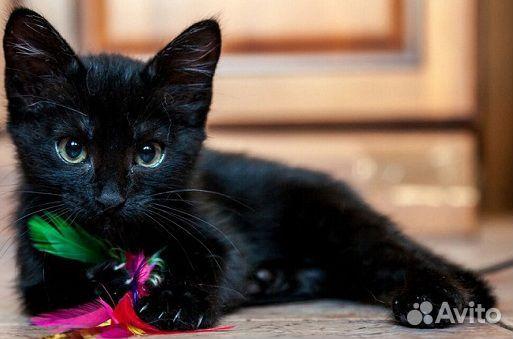 Котенок-девочка  89879370220 купить 1